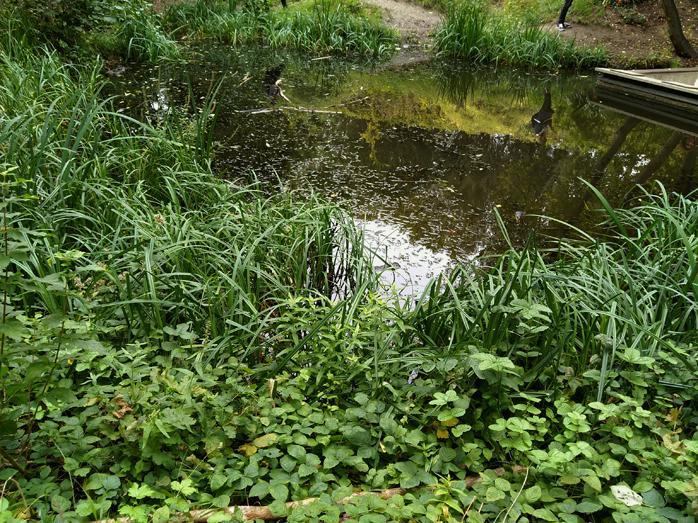 9 41 le jardin naturel
