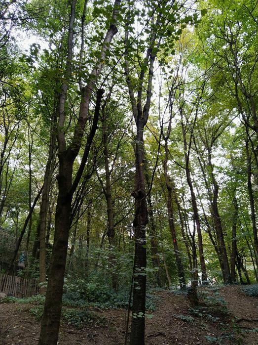 9 6 le jardin naturel