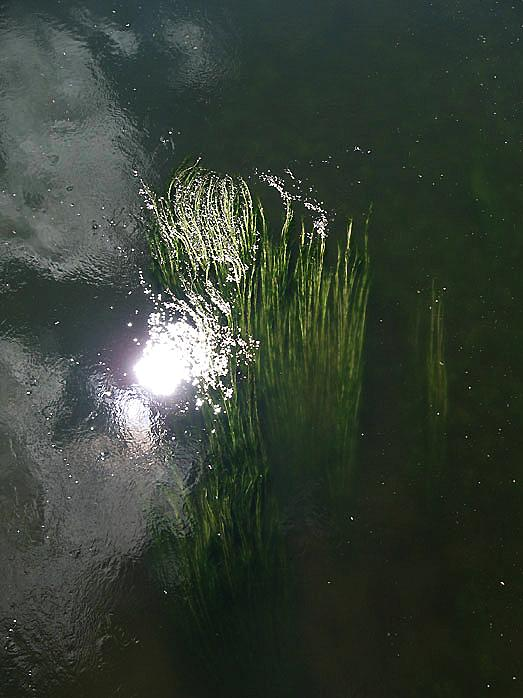 Algues3