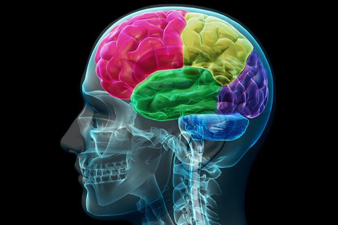 Cerveau1