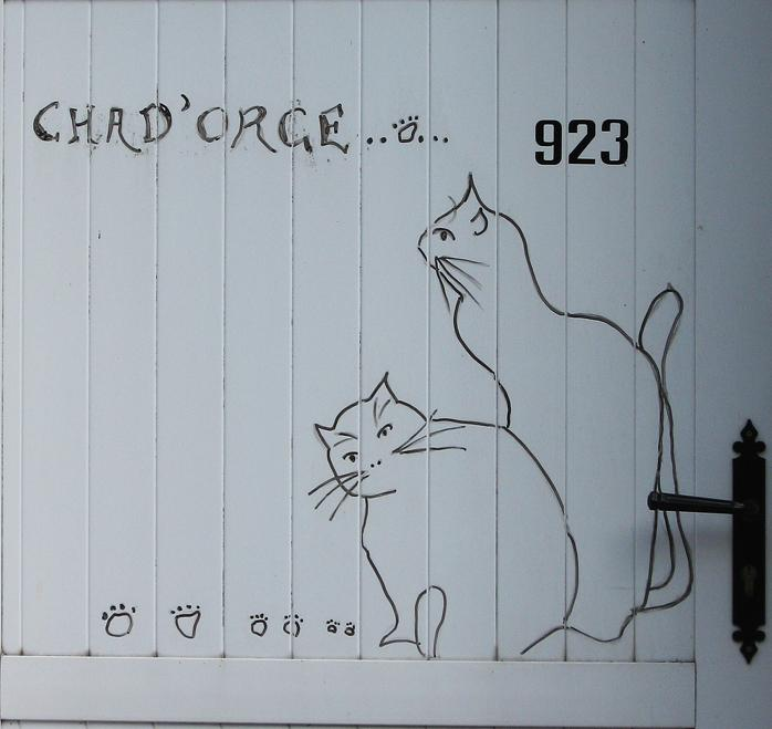 Chat d orge