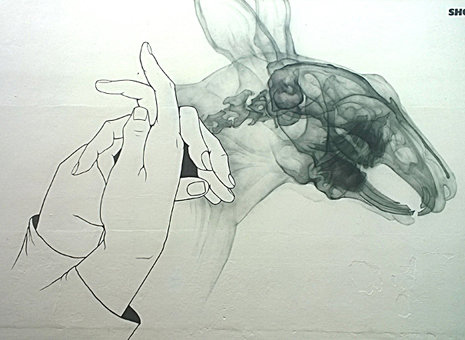 Mains et cheval 1