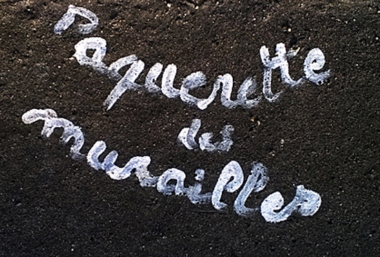 Paquerette 1